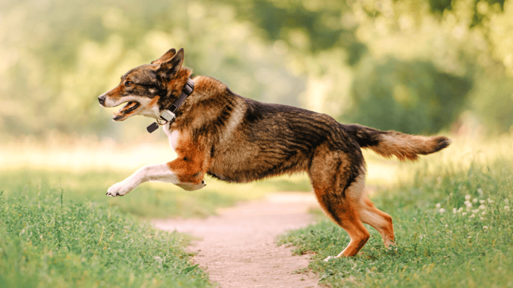 9 Best Selling Dog GPS Tracker (Review)