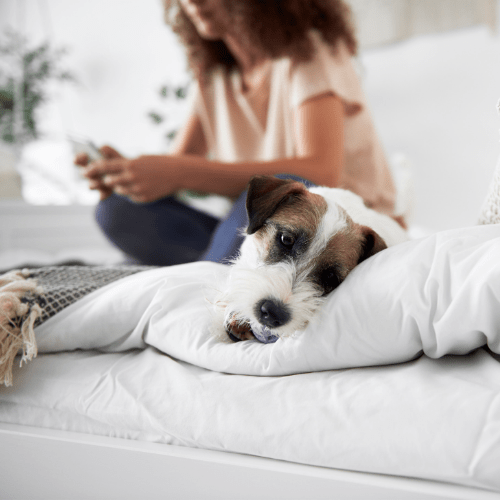 Your Dog Digs Because It's Bored