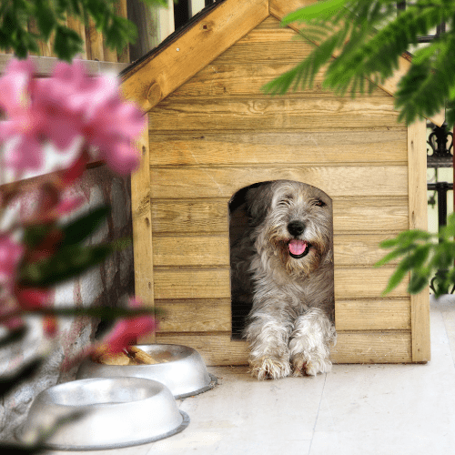 Your Dog Digs Because It Needs Shelter
