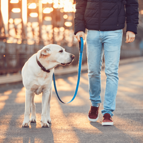 Walk Your Dog Twice A Day - Morning & Evening/Afternoon