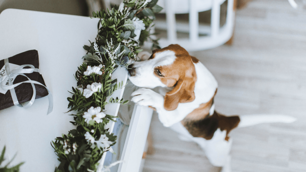 7 Natural Smells Dogs Hate The Most: Use It To Your Advantage