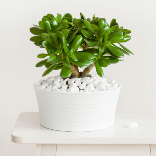 Bring plants indoors to add humidity to your room or house