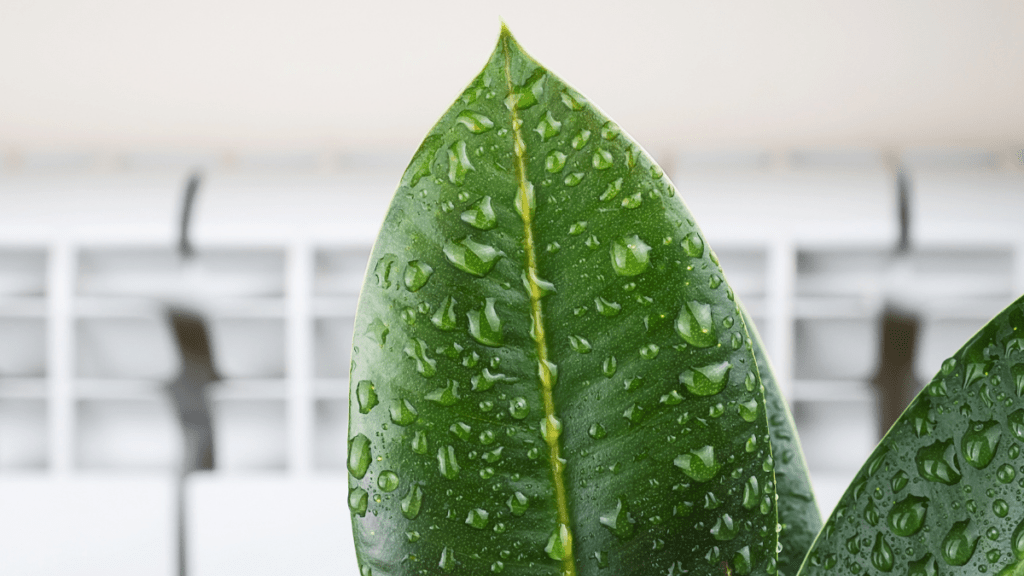 How To Add Humidity To A Room (9 Inexpensive Ways)