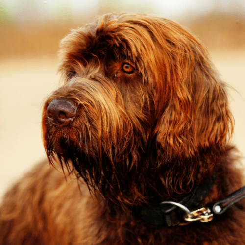 What type of hunting is best for Pudelpointer?